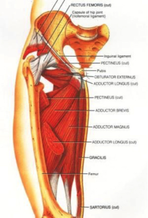 Dancer-Muscles