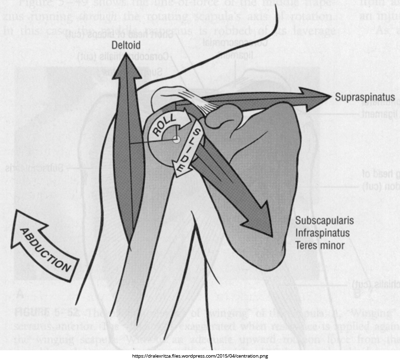 shoulder-centration